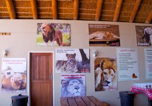 Coca Cola Sponsorship of Lion Sanctuary