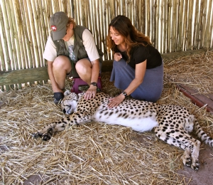 Petting Cheetah Joseph