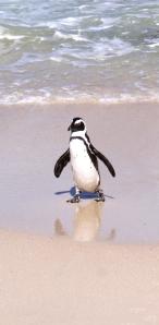 Penguin Reflection