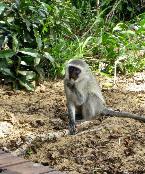 Final Monkeys